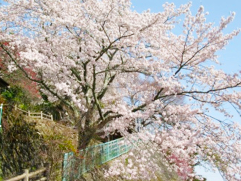 大湫宿 ビューティースポット 観音堂の春 春景色 大湫町コミュニティ推進協議会