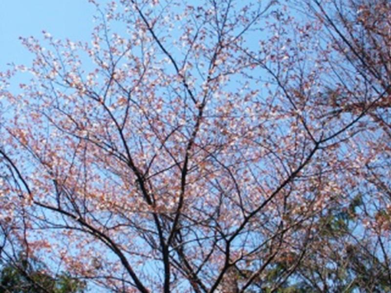 大湫宿 ビューティースポット 花の森 春景色 大湫町コミュニティ推進協議会