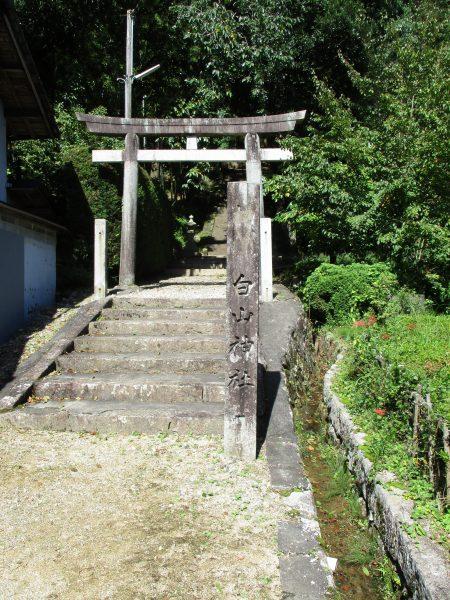 台風で実を落とした白山神社大イチョウ