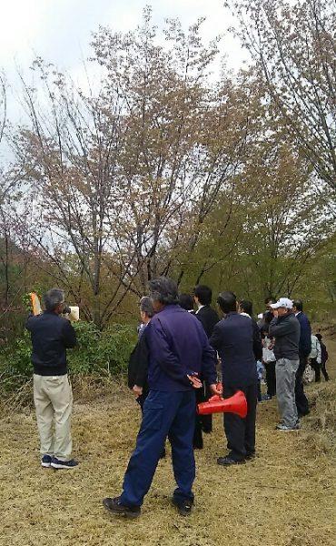 式典の後、桜を見て回る参加者